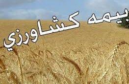بوکان رتبه اول بیمه محصولات کشاورزی را در آذربایجان غربی کسب کرد