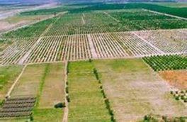 زمینهای کشاورزی آذربایجانغربی سنددار میشود
