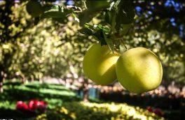 اینجا، بهشتِ سیب ایران